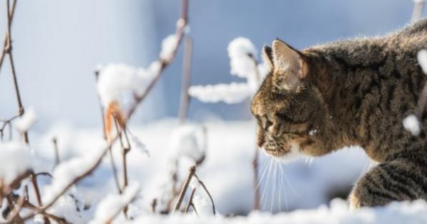 Різка зміна погоди вУкраїні: йдуть морози до-10