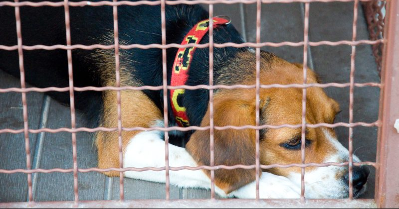 Собака у клітці