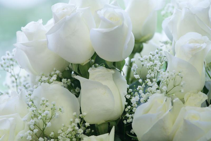Топ-7 способів дешевше купити квіти на свято