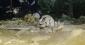 Печера