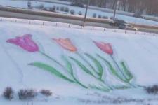 Тюльпани на снігу