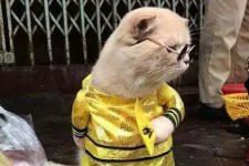 Кіт у костюмі