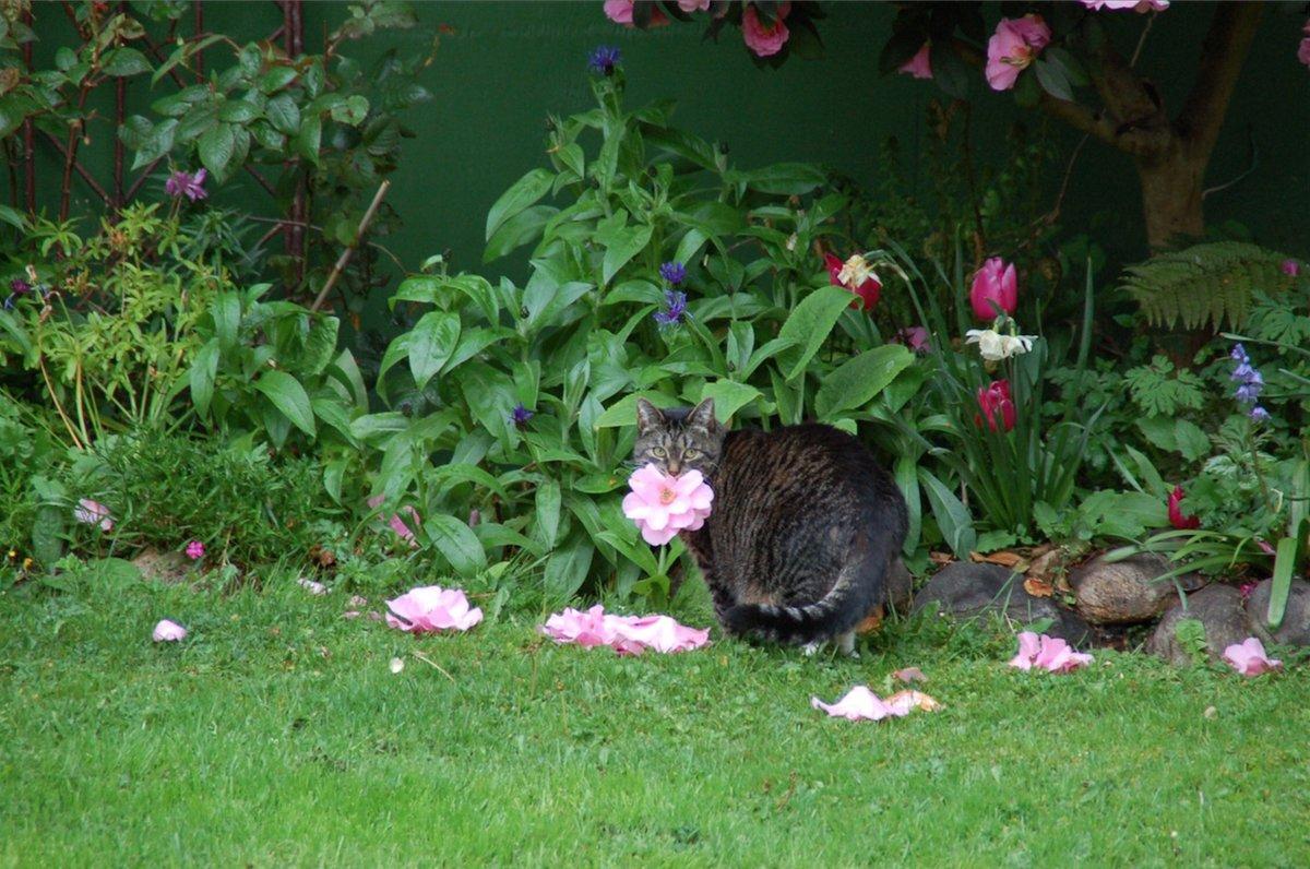 Кішка з квітами