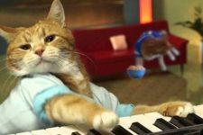 кот-пианист