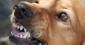 Злий пес