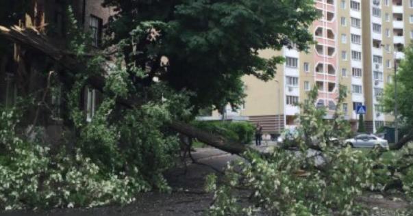Вітер повалив дерево