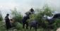 дтп в кировоградской области