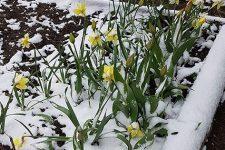 У РФ випав сніг у перший день літа