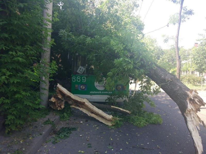 Дерево впало на тролейбус