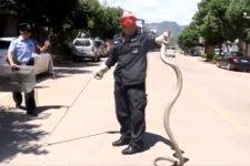 Королівська кобра в авто