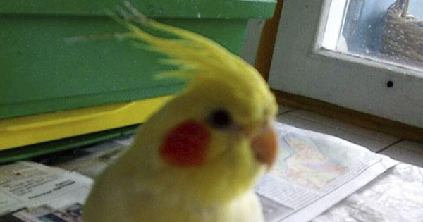 у Києві пожежники врятували від загибелі папугу