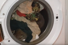Вомбат у пральній машині
