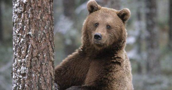 медведь убил туриста на аляске