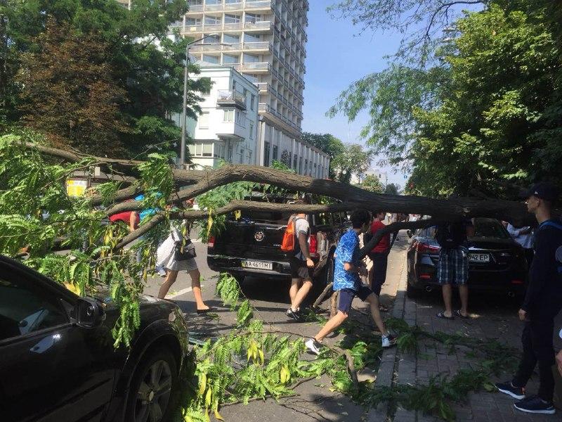 Дерево впало на авто біля Ради