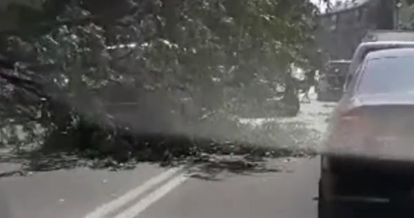 Дерево впало на авто