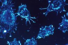 Ракові клітики