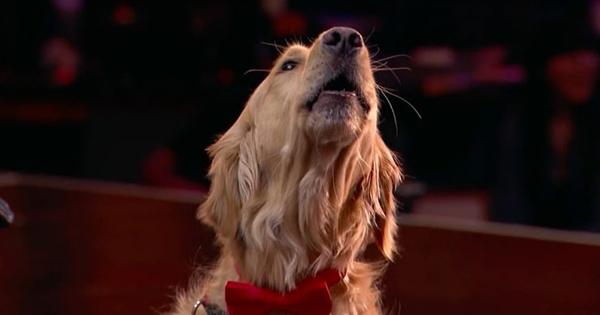 Собака Оскар