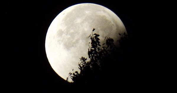 """Результат пошуку зображень за запитом """"місячне затемнення"""""""