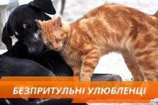 Всесвітній день безпритульних тварин