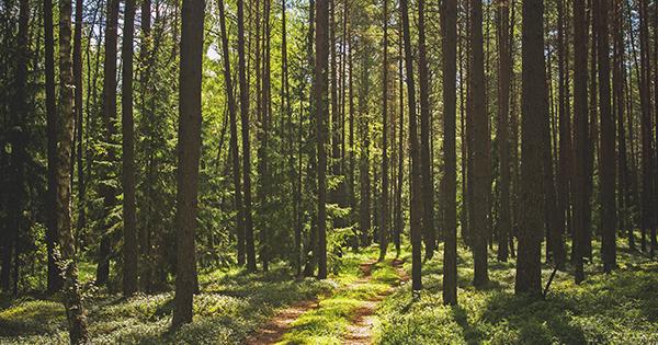 Жительница области скрывалась с больным младенцем в лесу, чтобы не обращаться к медикам: ребенок умер