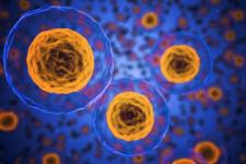 Клітини людини