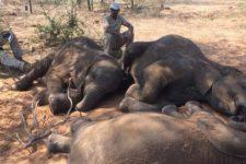 убийство слонов