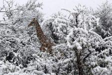Сніг в Африці