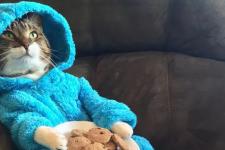 Посольство США розіслало запрошення на вечірку з котом у піжамі