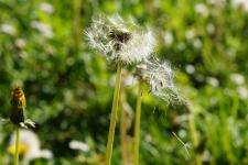 Украинцев ждет вспышка аллергии из-за бабьего лета