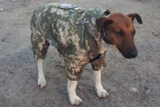 Собаці Фіну пошили військову форму