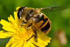 В Калифорнии из-за атаки пчел перекрыли улицу