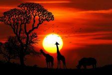 WWF запідозрили у фінансуванні тортур і вбивств