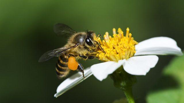 PornHub запустив канал із бджолами, що запилюють квіти