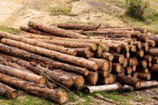 В Україні створили онлайн-карту рубок лісу: як і де вона працює