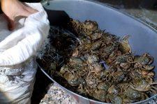 На Херсонщині затримали браконьєрів з уловом крабів на 91 млн грн