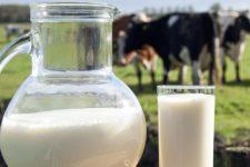 Фермерам стало невигідно тримати корів – чи загрожує Україні молочна криза