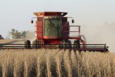 Урожай зернових в Україні у 2019 зріс до 75 млн тонн