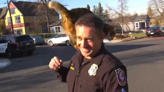 Пухнастий напад: кішка перервала інтерв'ю поліцейського