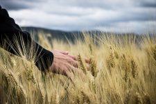 Незалежно від референдуму: країні-агресору заборонять купувати землю в Україні