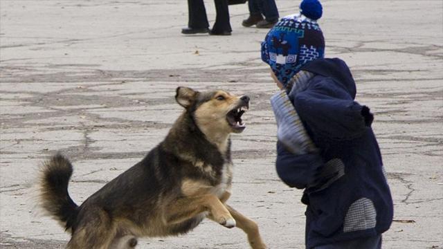 На Донеччині хлопчика покусала собака, дитину евакуювали на вертольоті у Дніпро