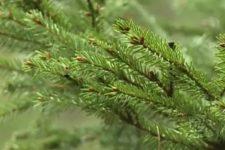 [:ua]Чому в Естонії можна законно зрубати ялинку в лісі та які правила[:ru]Почему в Эстонии можно законно срубить елку в лесу и какие правила[:]