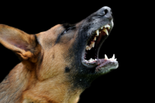 На Миколаївщині чоловік помер від сказу через укус бездомного пса