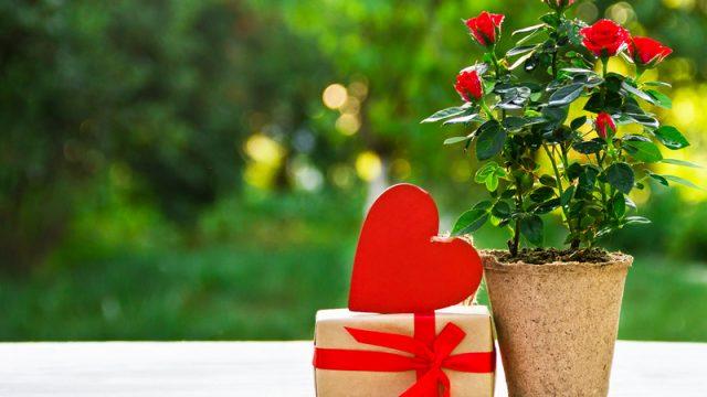 Что подарить девушке на День святого Валентина