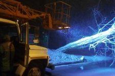 Сильный ветер и снежные заносы: в Одессе повалило более 50 деревьев