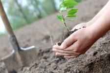 [:ua]Мільйон дерев за день. Як долучитися до акції Озеленення України[:ru]Миллион деревьев за день. Как присоединиться к акции Озеленение Украины[:]