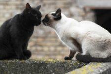 Международный день кота: топ-10 интересных фактов о котах