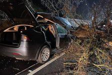 Автопилот Tesla спас две семьи от гигантского падающего дерева