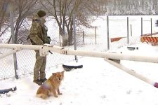 Проект Стіна: як виглядає кордон із РФ на Сумщині та Чернігівщині