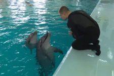 Дельфінотерапія у Трускавці. Як реабілітують бійців АТО