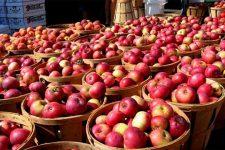 Когда празднуют Яблочный спас 2020 — дата